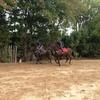 Jockey boys