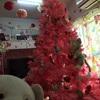 ねこハウスのクリスマスツリー☆*:.。. o(≧▽≦)o .。.:*☆