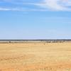 ここは動物の楽園 Ikara-Flinders Ranges