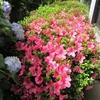 初夏を彩る草花たち