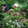 雨の後の花たち
