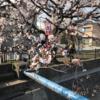 桜の季節の記憶