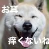 犬に最もストレスが少ない耳の治療薬「オスルニア」、嫌な治療は動物病院にまかせましょう