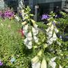 ★大阪駅の花壇