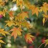PENTAX Q7 で小石川後楽園の冬紅葉を撮る