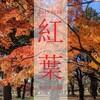 【写真】光が丘公園の紅葉