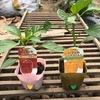 【農作業】サニーレタス・ミニトマト・万能ねぎの成長記録とパプリカの苗を植えた話。