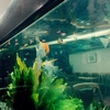 池袋 フラミンゴ