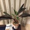 最近の自宅の植物事情