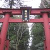 【新潟県】雪割草巡り!弥彦山へ行ってきました