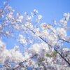この春から、あなたの生活を豊かにする!おすすめアイテム&サービスまとめ。
