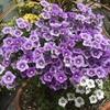 最近咲いた花&花壇を作りたい
