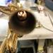 管楽器リペアブログ 日々の修理、メンテナンスを綴っていきます。 卯月編②