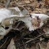 森のなか、鹿の骨から飛びだす連想話