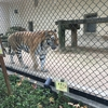 広島県 安佐動物園ってどんなところ?