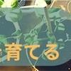 我が家にもある観葉植物サンスベリアはおすすめです