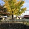 安川緑道公園、終点「武田山橋跡」まで足伸ばしました。