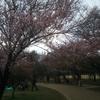 三鷹の森ジブリ美術館+井の頭恩賜公園「桜の花見」で最高の一日