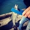 実家にて2日目の釣り、釣果よりも美味しそうなのは…【駿河湾のサクラエビとシラス】