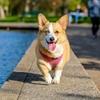 犬と遊ぶ♪夏の「プール」
