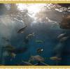 【浜名湖旅行④】魚に触れる水族館ウォットはかなり楽しい!