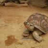 【上野動物園 両生類爬虫類館】水族館では見ることのできない水族展示が見られる!都内最大の動物園