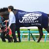 福島、平地競争初勝利のオジュウチョウサンが放牧「有馬記念から逆算して考えていく」 |更新9/16 オジュウチョウサン最新近況、和田郎師「元気です。治療方針は固まりました」