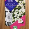 【ラベル】宿根アレナリア ブリザードコンパクト