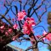 【日常】根津の花、谷中の花