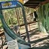 無料でコアラに会える!Daisy Hill Koala Centre