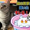 続・絶対に台所に侵入したい猫とさせたくない飼い主の奮闘記【キッチン対策】