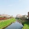 【多摩散歩】野川へ桜を見にに行ってきました~その1~