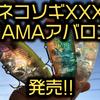 【ファトラボ×HAMA】プロショップ限定のアバロンカラー「ネコソギXXX HAMAリミテッドカラー」発売!