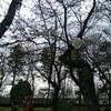 【雑記】桜草公園+秋ヶ瀬公園散歩