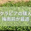 クラピアを植える時期は梅雨の時期が一番最適でしょう