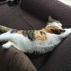 【愛猫日記】毎日アンヌさん#293
