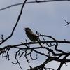Macの「写真」アプリで暗い野鳥写真を救出する
