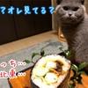 節分と猫と関西人