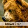 カナダの野生動物 -クマ編-