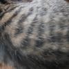 イクメン猫ダイちゃん、がんばっております。