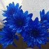 「青い花」に一目惚れ…