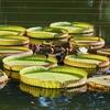 神代植物公園の池(東京都調布)