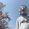 グラサン大仏でおなじみの!?布袋大仏の桜を見に行きました。