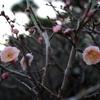 庭に訪れる、春の足音
