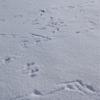 鳥の足跡。