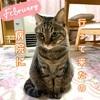 飼い猫の咳が再発して病院へ【アレルギー】症状は?病院で注射と薬
