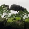 石神井公園と水鳥