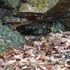 山奥の水のしたたり落ちる岩、タゴガエル