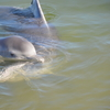 イルカの餌付け体験ならオススメ! ティンカンベイ