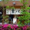 ツツジの咲く街角『西太子堂~三軒茶屋駅』